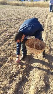 jorge vega azafrán villacañas