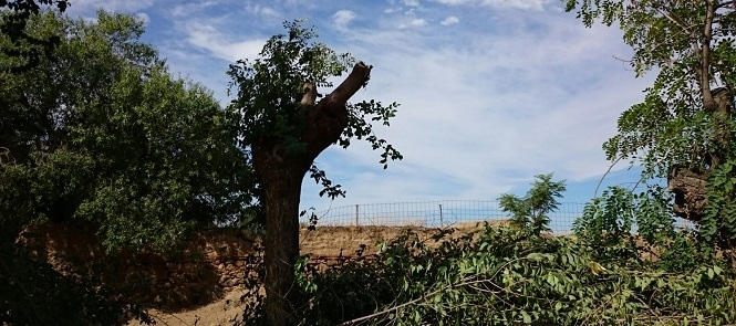 Ganemos Polán denuncia un atentado al patrimonio medioambiental del municipio